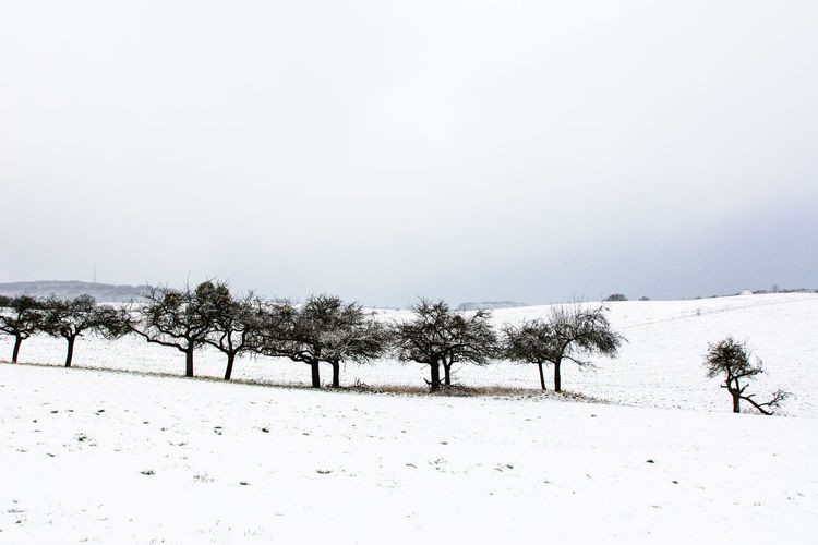 Absence Bare Tree Bench Cold Cold Temperature Empty Eye4photography  Footpath Grass Landscape Our Best Pics Outdoors Park Park - Man Made Space Park Bench Protecting Where We Play Season  Shootermag Showcase March Tranquil Scene Tranquility Landscapes With WhiteWall Tree Trunk Weather Winter