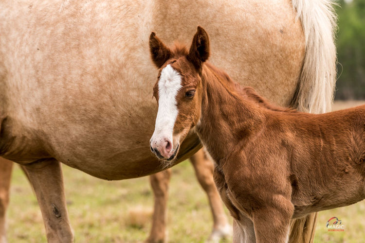 Baby with Mom Animal Themes Close-up Day Domestic Animals Grass Horse Horse, Colt, New Born Horse Human Body Part Livestock Mammal Nature Outdoors People Standing Togetherness