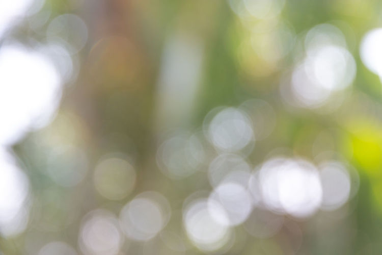 Defocused Abstract light bokeh of light on tree , Abstract background Defocused Backgrounds Abstract Close-up No People Day Nature Tranquility Plant Outdoors Abstract Backgrounds Green Color Lens Flare Growth Beauty In Nature Full Frame Sunlight Focus On Foreground Selective Focus Tree Soft Focus