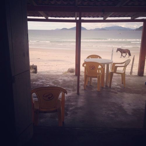 Brazil Beachlife. And horses. Brazil Animals Traveling Travel Photography Iphone Fotography Florianópolis Horse Chilling Relax Enjoy