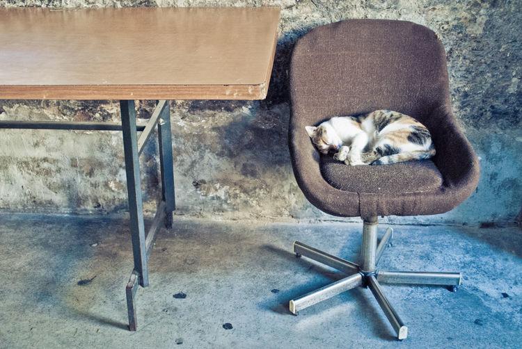 Cat Sleeping On Chair In Room