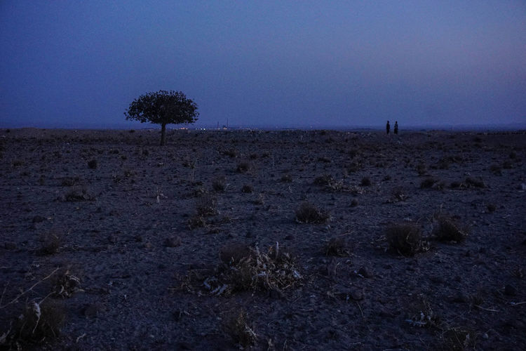 Travel Destinations Travel Photography Iran Shia Community Nomadic Zoroastrian Islamic Architecture Plant Sky Landscape Land Environment Tree Beauty In Nature Tranquil Scene Tranquility Non-urban Scene Horizon No People Horizon Over Land Growth Grass Copy Space Outdoors Arid Climate