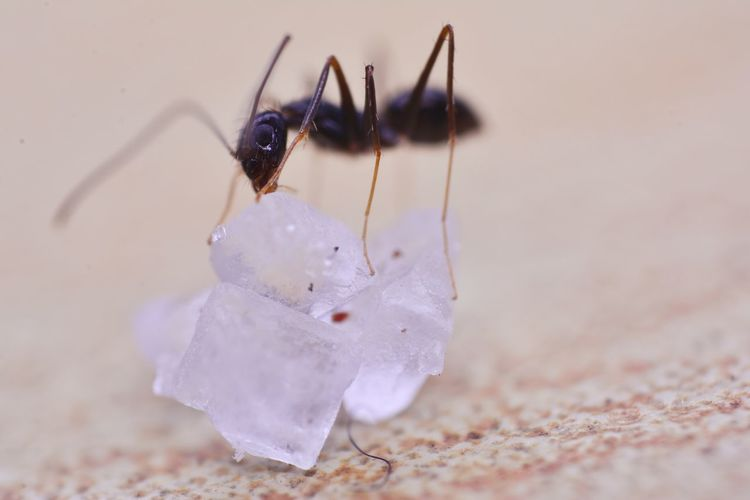 Close-up of insect on white table