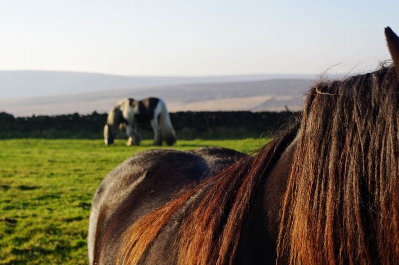Cropped Image Of Horse On Field Against Sky