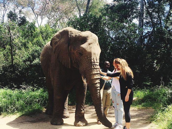 Elephant Sanctury Part 2 Elephant Beauty In Nature South Africa Friendship Outdoors Tranquil Scene Enjoying Life Enjoyment Travel Besties