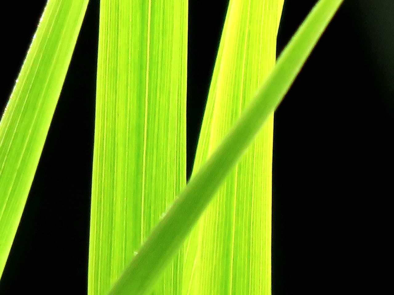 green color, growth, plant, close-up, no people, nature, day, grass, outdoors, freshness