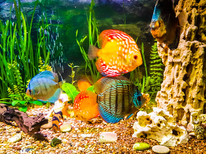 Aquarium AQVA Aquarium Life Water Sea Life Multi Colored No People Nature Fish Fishes Plants 🌱 Primer Bubbles Relaxing Relaxation Water World  Beatiful