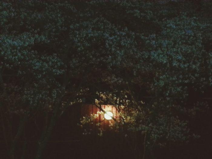 Goodnight Hugging A Tree Flowers