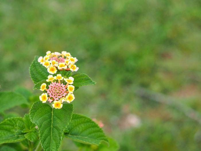 Flower Warm
