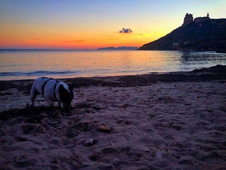 Frenchbulldog Bouledoguefrancais Bouledogue Bulldog Sunset Cagliari Sardegna Sea Sky Loves_cagliari Loves_sardegna Amazing Loves_United_Sardegna Loves_united_cagliari Igerscagliari Instasardegna Volgosardegna Volgoitalia IG_PERLAS Volgocagliari Vivosardegna Photooftheday Igersitalia Sardegnaofficial Beach italy instadaily sardiniaphotos sardiniaexp thefrenchiepost
