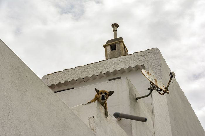 barking dog Architecture Barking Dog Day Dog Domestic Animals Haustier Hund Low Angle View No People One Animal Pastel-colored Pets Sky SPAIN Text Space
