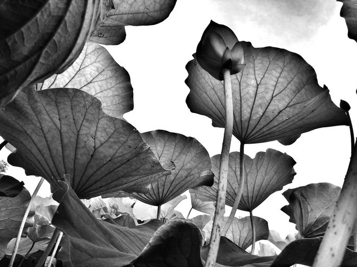 Flowerporn Bw_collection 虫メセン アヤコ的フォト