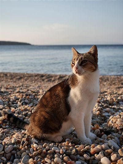 Cat lying on beach