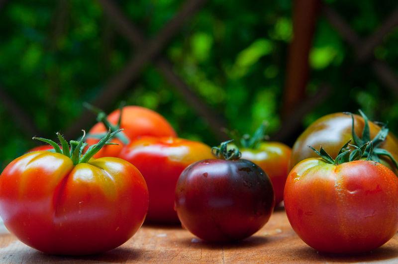 Alte Tomatensorten Alte Sorten Außenaufnahme Berkeley Black Yum Yum Garten Son Tomaten Tomatensorten