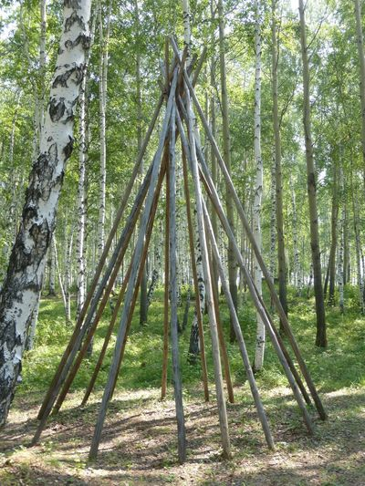 wooden tent construction in Russian birch forest, Siberia, open air museum Russia россия Russian Nature Russian Open Air Museum Beauty In Nature Birch Forest Environment Forest Green Color Land Landscape Nature No People Non-urban Scene Outdoors Plant Siberia Tranquility Tree Tree Trunk Trunk Wooden Structure Wooden Tent WoodLand