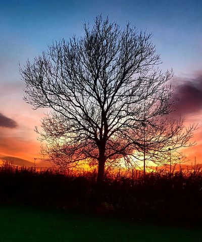 Shillouette Art Silhouette Trees Sunset Sunset_collection Colour Of Life Coulour Of Life