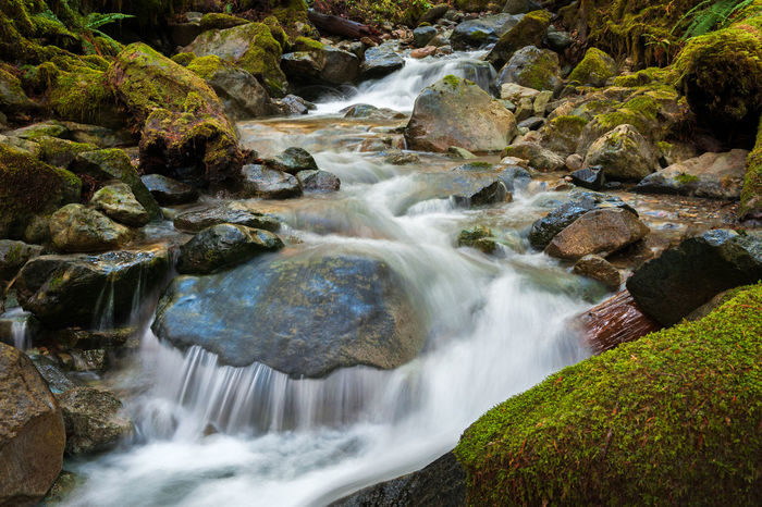 Rainforest Creek, Mt. Baker, Washington. Wells Creek flows through the rainforest emptying into the Nooksack River. Mt. Baker National Forest, Washington State. Creek Flowing Water Pacific Northwest  Rain Rocky Washington Beauty In Nature Day Environment Forest Long Exposure Moss Motion Mt. Baker Nature No People Nooksack River  Outdoors Outdoors Photograpghy  Rainforest Rapid Scenics Stream Water Waterfall