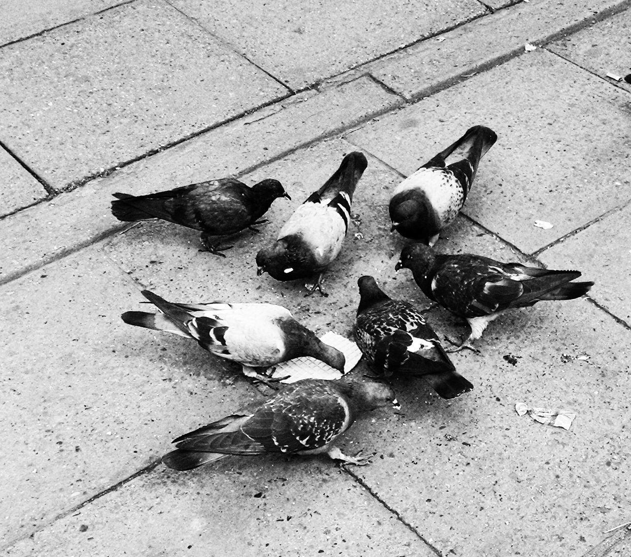 High Angle View Of Pigeons Feeding On Footpath