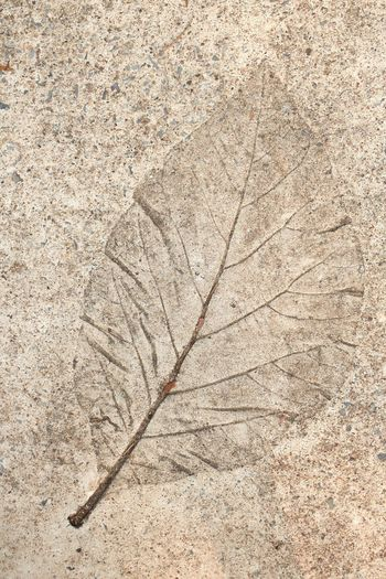 Leaf print on cement floor : Cement Floor Wall - Building Feature Nature No People Pattern Textured  Close-up Outdoors Backgrounds Day Art Plant Part Leaf Dry Leaf Vein Plant Directly Above Autumn Change Fragility Fossil Vulnerability  Brown