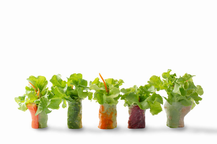 Studio Shot White Background Food And Drink Still Life Vegetable Freshness Healthy Eating Indoors  Food Wellbeing Green Color Copy Space No People Close-up Cut Out Lettuce Leaf Plant Part Green Root Vegetable Herb Vegetarian Food Coriander Chopped Temptation