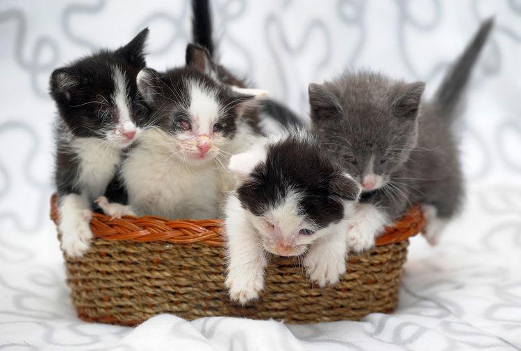 Cats relaxing in basket