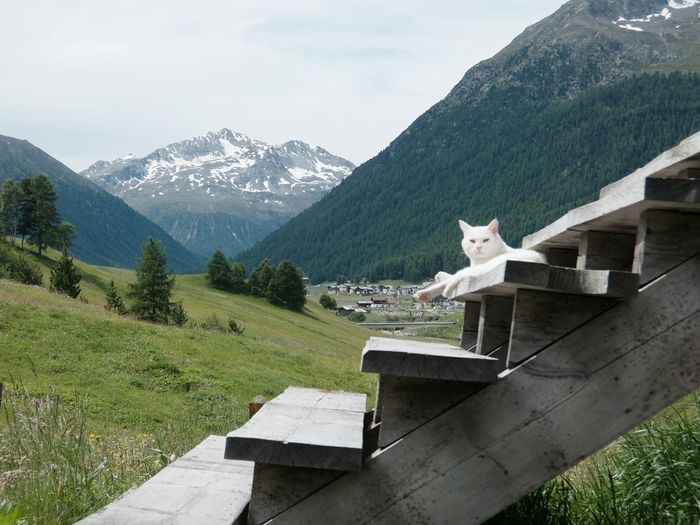 Livigno Valtellina Mountains Alps Cat My Cat Is Cooler Than Your Kids! Cloudy Kodachrome The Purist (no Edit, No Filter) Fujifilm