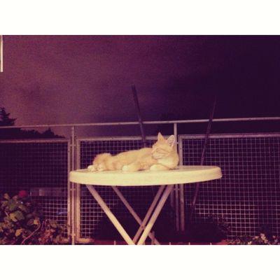 otto in da storm Cat Chill Love Storm night cool