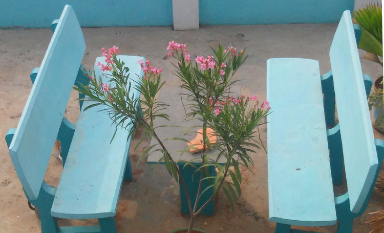 Benches Benches And Table Blue Bench, Coast, Coastline, Forest, Grass, Sand, Sea, Shore, Waves Blue Benches Chairs And A Table Chairs And Tables Chairs In Nature Flowers Garden Architecture Garden Flowers Gardening Roof Chairs Roof Gardens