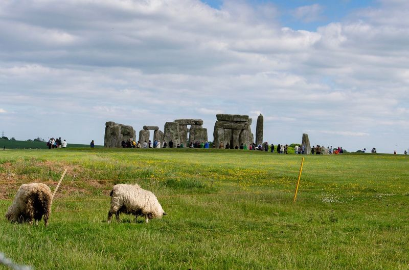 Sheep and tourists at stonehenge on the salisbury plain, wiltshire, england