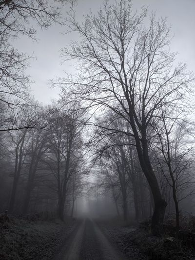 Bare trees by road against sky during foggy weather