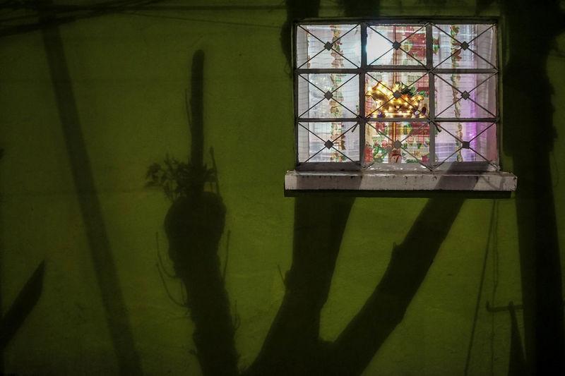 Shadow of flower on window