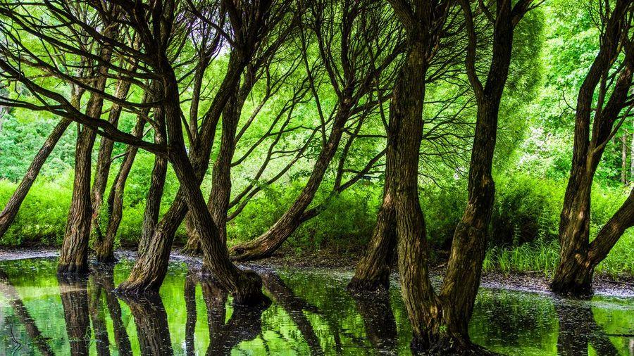 Forest Pentax
