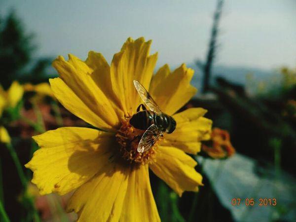Bee 🐝 Flower Random