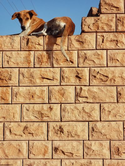 Low angle view of a dog against wall