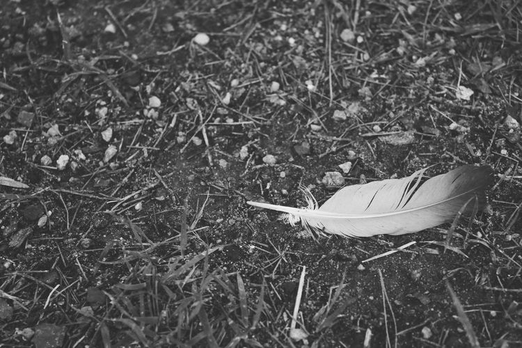 Field High Angle View Day No People Outdoors Close-up Fragility Landscape Feather  EyeEmBestPics Lonely EyeEm Best Shots Photography Photo Real Photography Photoshoot EyeEmNewHere Blackandwhite Black & White Black And White Photography Light And Shadow Ground Fall Fallen Feather