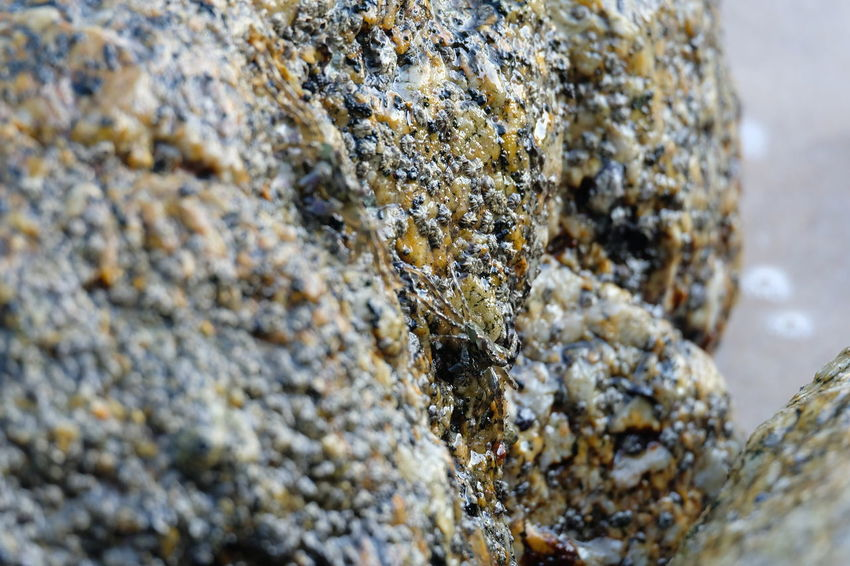 Animal Animal Themes Animal Wildlife Animals In The Wild Close-up Day Group Of Animals Insect Invertebrate Large Group Of Animals Lichen Marine Nature No People Outdoors Rock Rock - Object Rough Selective Focus Solid Textured