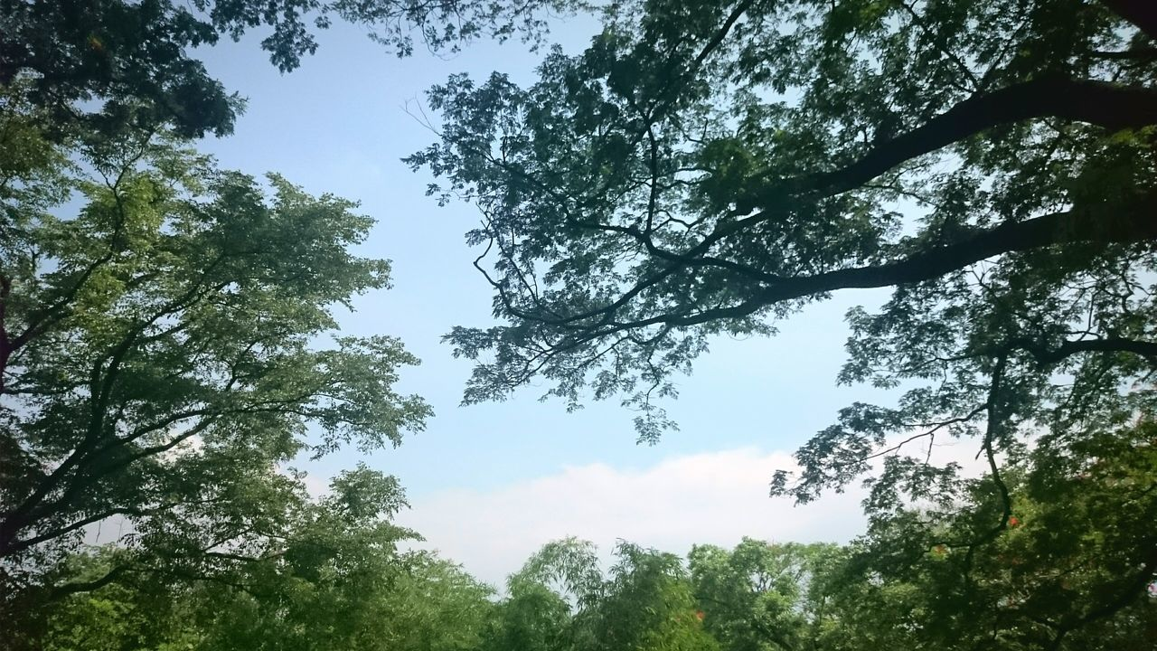 nature, tree, beauty in nature, low angle view, day, forest, sky, tranquility, no people, growth, outdoors, scenics, blue sky
