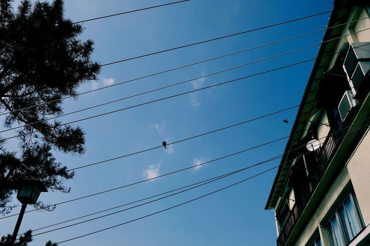 Architecture Blue Building Building Exterior Built Structure Cable City Connection Day Electricity  Low Angle View Nature No People Outdoors Plant Power Line  Power Supply Sky Technology Tree