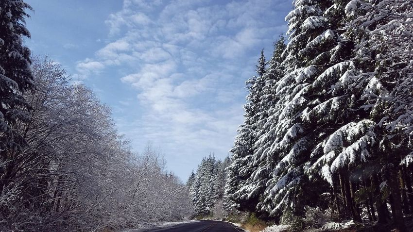 Naturelovers Blue Sky Look Up The Sky Always Looking Up Nature_collection Nature Photography Pacific Northwest  Snow ❄ Evergreen Trees Evergreens And Snow Senic Drive Senic View Out For A Drive Curves And Lines