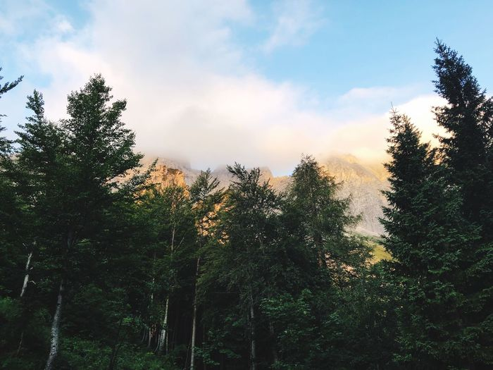 Forest bellow
