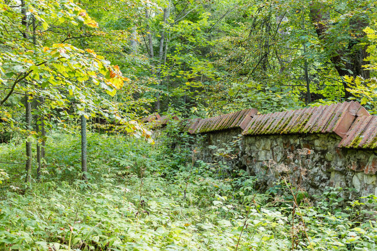 Stone fence in the forest, Russia, Polenovo Autumn Grass Russia Russia. Polenovo Tula Oblast Day Fence Forest Green Color Growth Museum Nature No People Outdoors Polenovo Strakhovo Tree