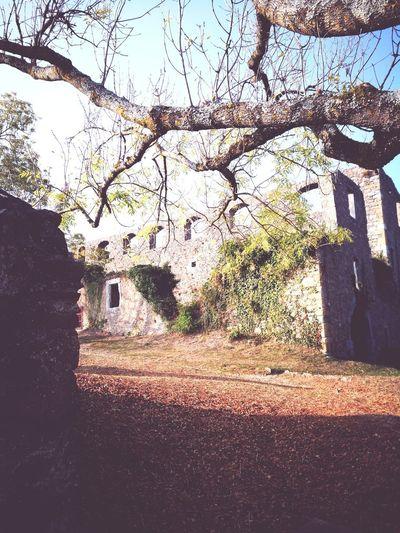 ruin hohentwiel