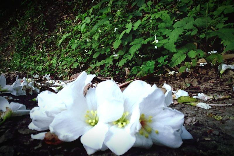 五月雪。 Flower Head Flower Water High Angle View Close-up Plant