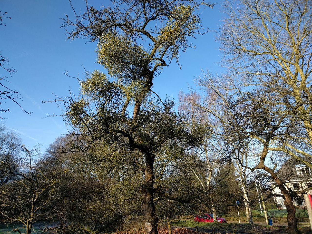 tree, branch, growth, nature, low angle view, beauty in nature, day, no people, outdoors, tranquility, sky, bare tree