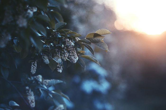 сказка уют Bokeh пейзаж Nature Day красота Beauty In Nature Macro Природа весна веснапришла первыйденьвесны зелень  цветы Закат Sunset Flowers Beautiful Outdoors No People Боке атмосфера