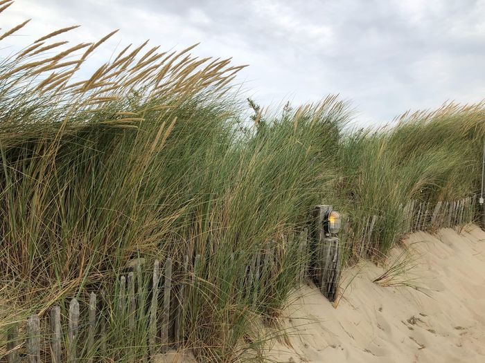 Grass growing at beach against sky