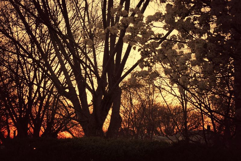 Sunset thru the tree's Showcase:april Sunset_collection Tree_collection  Trees And Sky Tree Blooms EyeEm Best Shots Eye4photography  Columbus, Ohio EyeEm Gallery