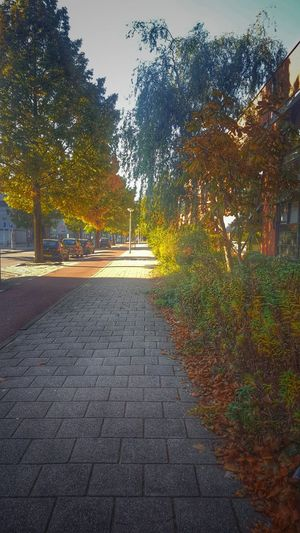 Autumn Collection Autumn Autumn Leaves Autumn Colors HDR Streetphotography World_shotz World_great Natgeo Amsterdam