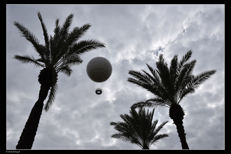 Ballons In The Sky Nature Sky And Clouds Sky Collection Trees Clouds Clouds And Sky Flying Ballons Sky Sky_collection Trees And Nature Trees And Sky Trees Collection Treescape Treescollection