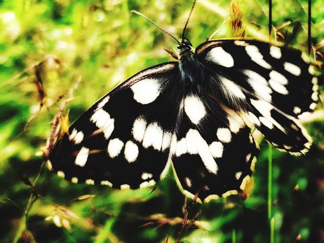 Butterflies Insect Butterfly - Insect Animal Themes One Animal Animals In The Wild Butterfly Animal Wing Close-up Animal Markings Beauty In Nature No People Fragility Animal Wildlife Outdoors Day Full Length Perching Spread Wings Freshness
